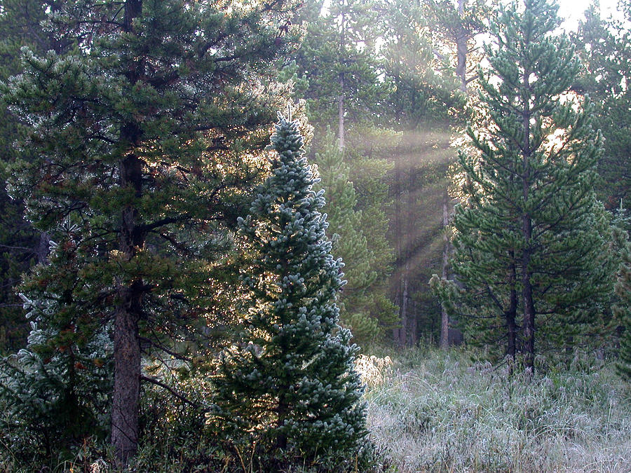 Morning Rays Photograph by Shane Bechler