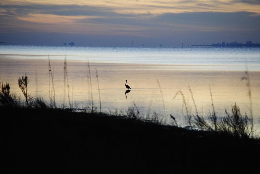 Beach Photograph - Morning Solitude by Michele Kaiser