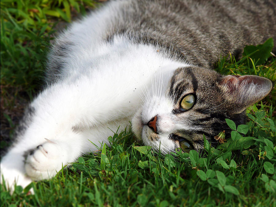 Cat Photograph - Morning Stretch by Christina Rollo