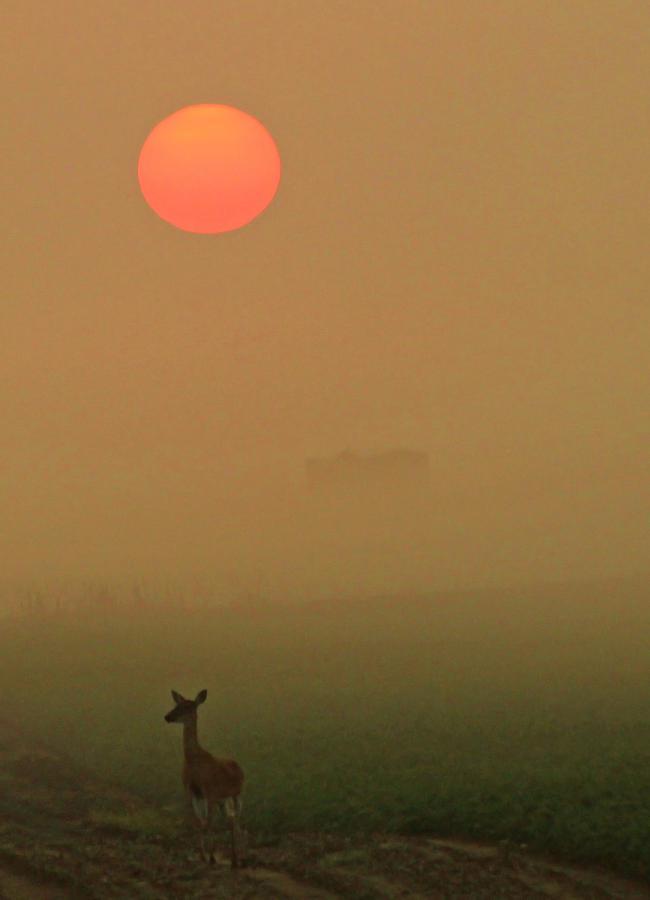 Deer Photograph - Morning Stroll by Sarah Boyd