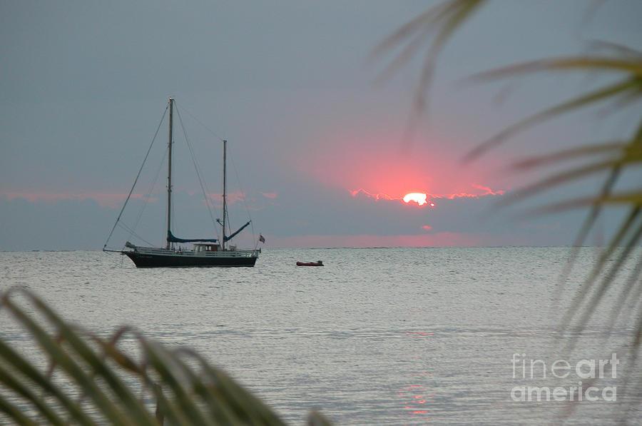 Morning Sun by Jim Goodman