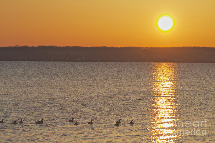 Sun Photograph - Morning Swim by William Norton