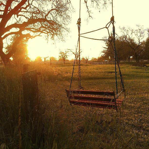 Golden Hour Photograph - Morning Swing by CML Brown