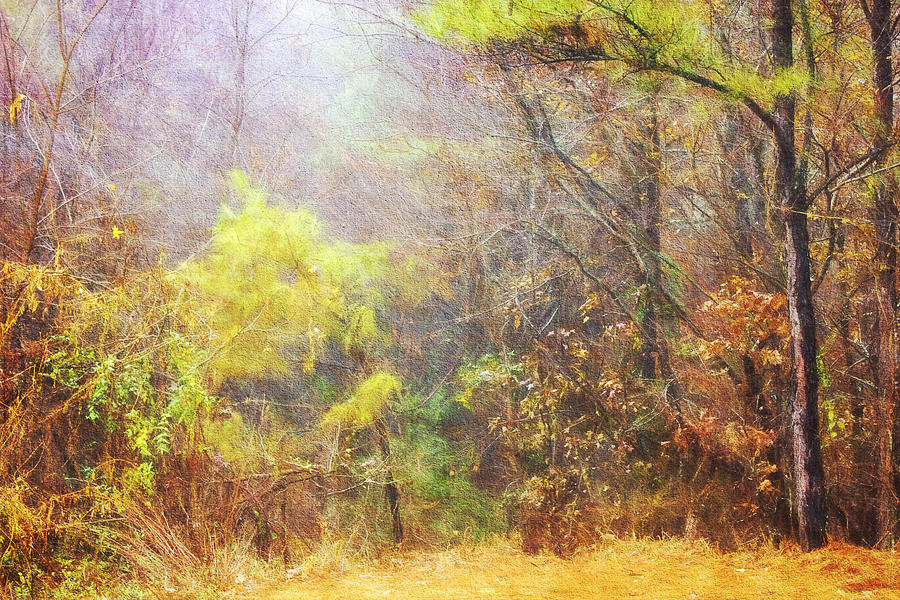 Misty Morning Photograph - Landscape - Trees - Morning Walk In The Woods by Barry Jones