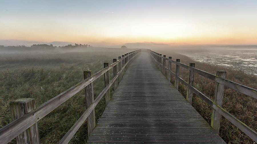 Denmark Photograph - Morning Walk. by Leif L??ndal