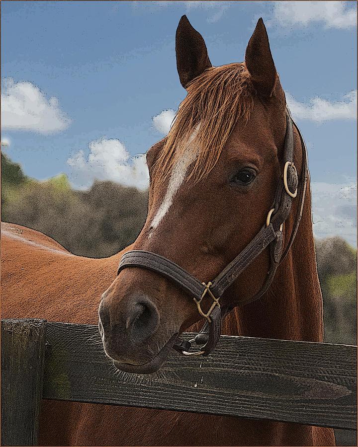 Horse Photograph - Morning Watch by Wynn Davis-Shanks