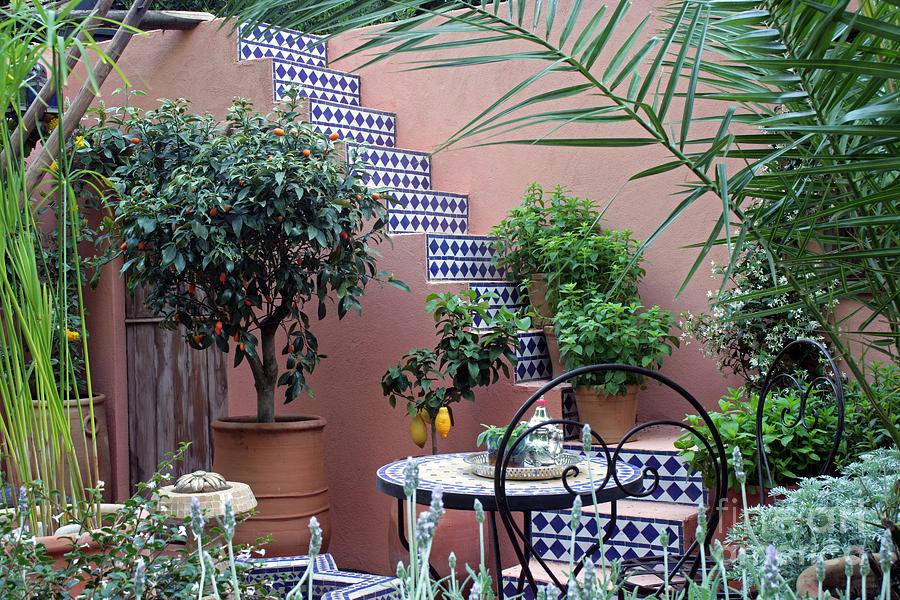 Moroccan Garden Chelsea Flower Show Photograph By Ros Drinkwater