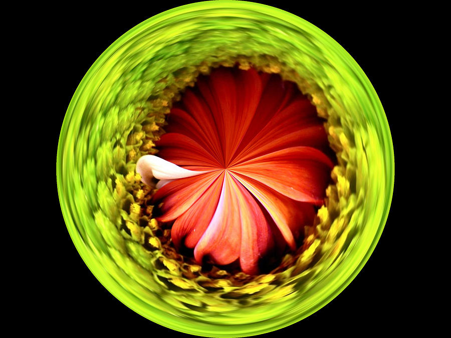 Flower Photograph - Morphed Art Globe 1 by Rhonda Barrett