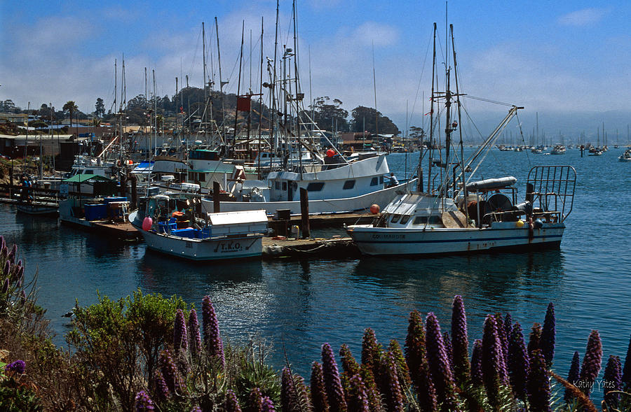 Seascapes Photograph - Morro Bay Harbor by Kathy Yates
