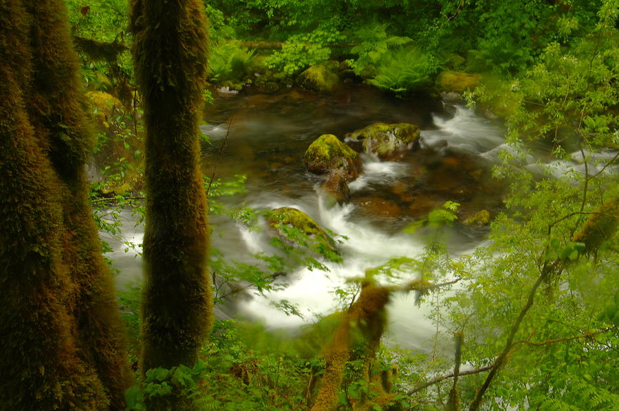 Trees Photograph - Moss Covered Trees Foregound Eagle Creek by Jeff Swan