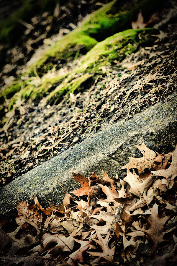Moss Photograph - Moss Curb Leaves by Beth Sawickie