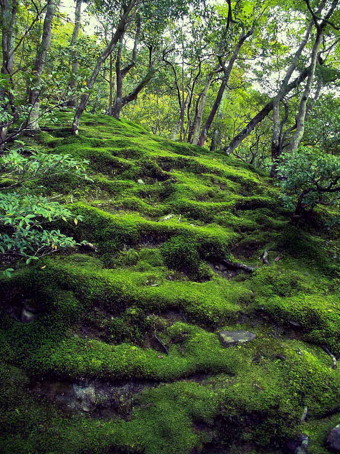 Moss Photograph - Moss Forest In Kyoto Japan by Daniel Hagerman