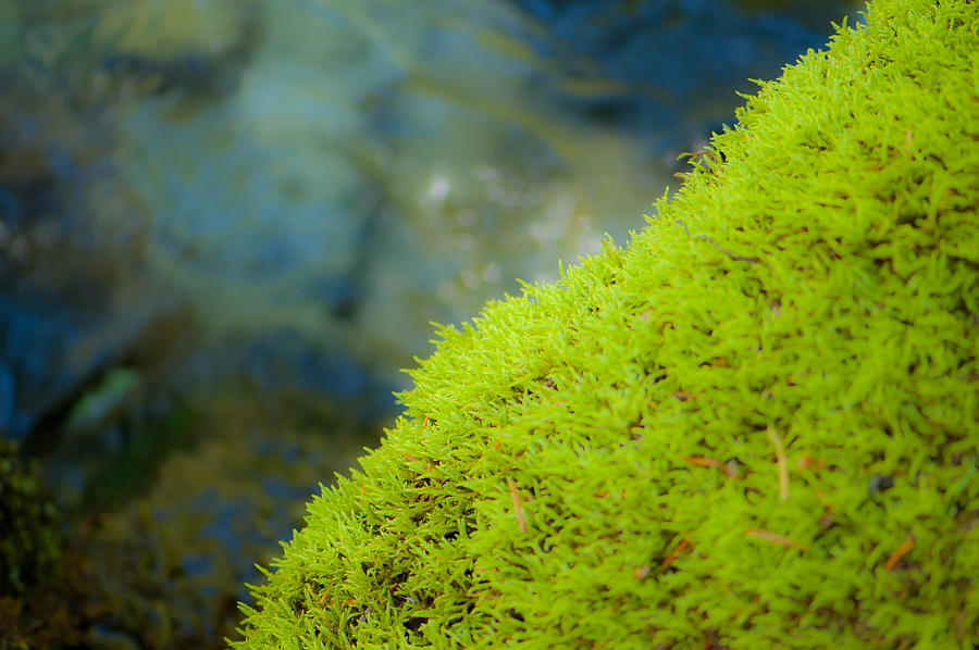 Moss Photograph - Moss On River by Sarah Crites