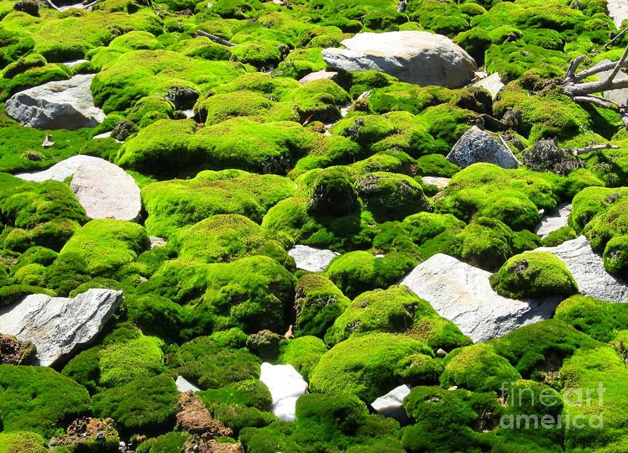 Mosscape Photograph