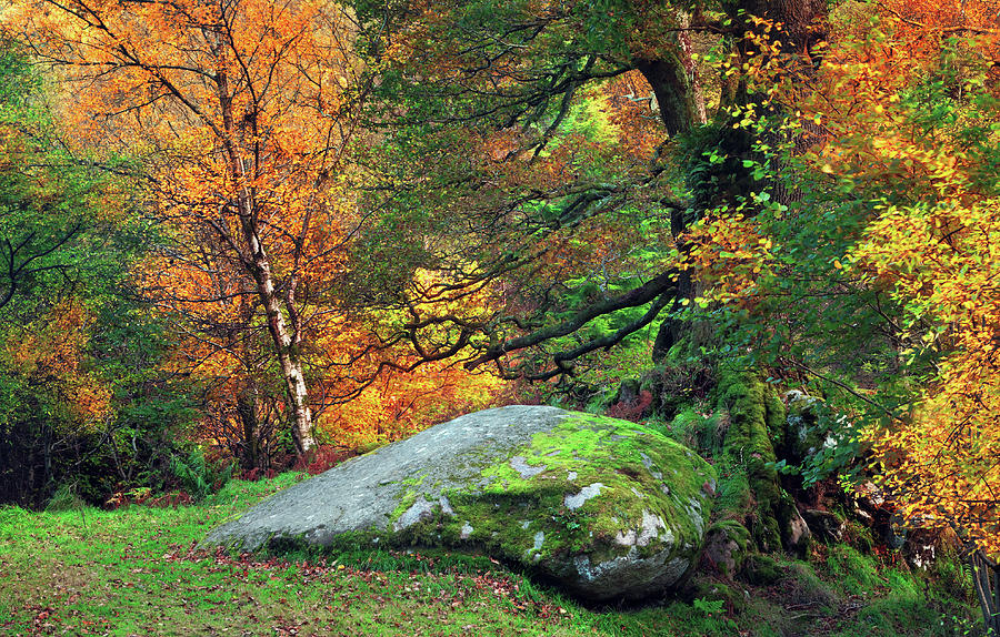 County Wicklow Photograph - Mossy Boulder In The Autumn Forest by Mammuth