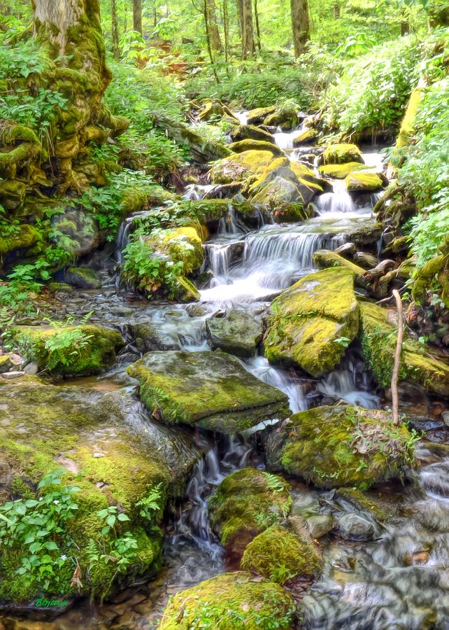 Creek Digital Art - Mossy Creek by Bob Jackson