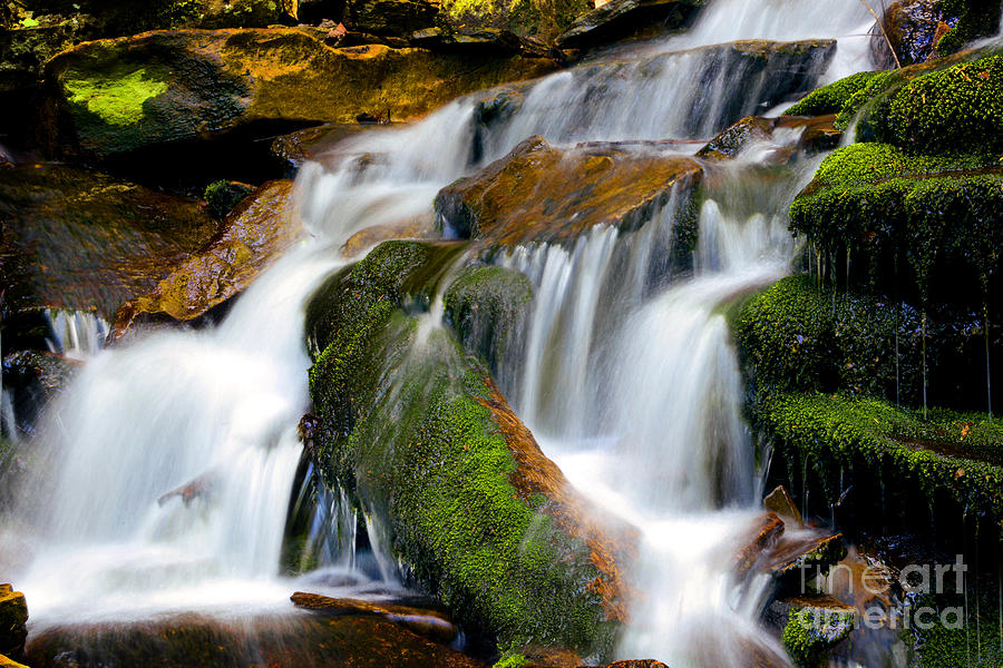 Ricketts Glen Photograph - Mossy Falls by Paul W Faust -  Impressions of Light