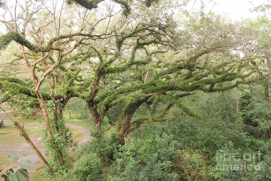 Moss Photograph - Mossy Oak by Joseph Williams