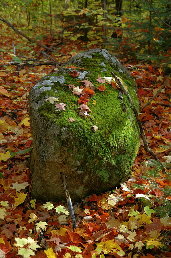 Mossy Rock Photograph by Sandra Updyke