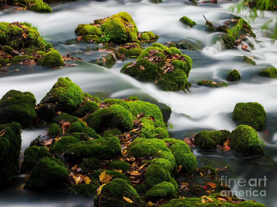 Water Photograph - Mossy Spring by Shannon Beck-Coatney
