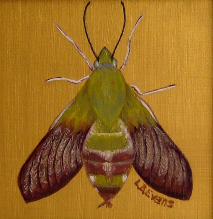 Moth by Lynda Evans