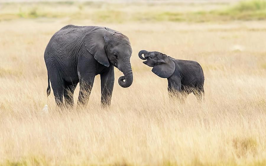Kenya Photograph - Mother And Baby Elephants by Hua Zhu