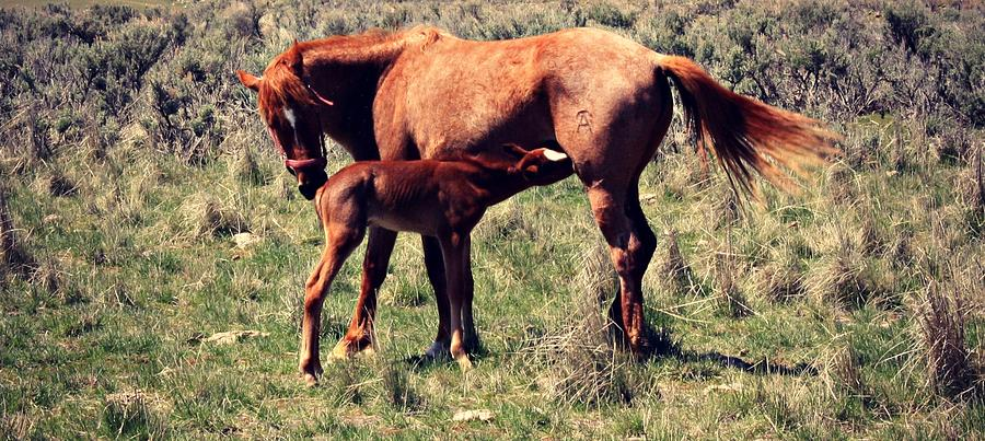 Mother And Baby Photograph - Mother And Baby by Goldie Pierce