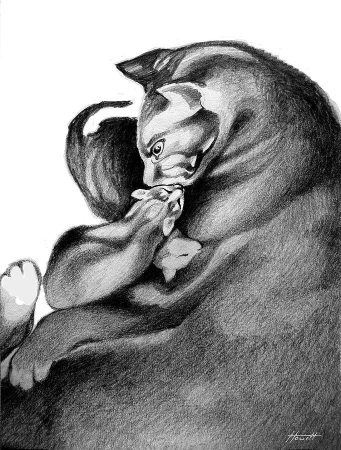 Cat Drawing - Mother Cat by Patricia Howitt