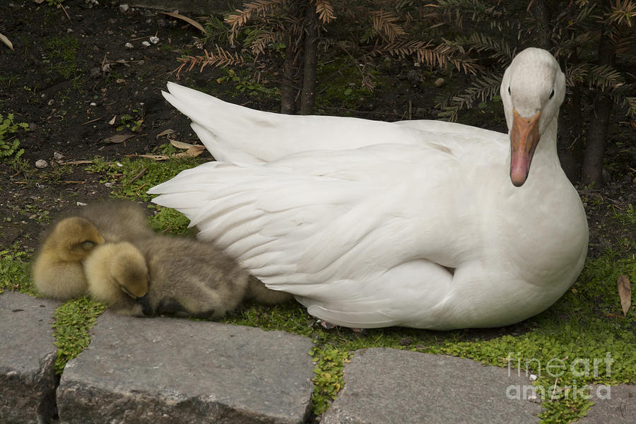 Mother Love Photograph - Mother Love by Victoria Harrington