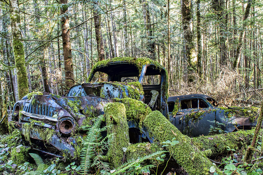 Old Cars Photograph - Mother Nature Rules Supreme by Peggy Collins