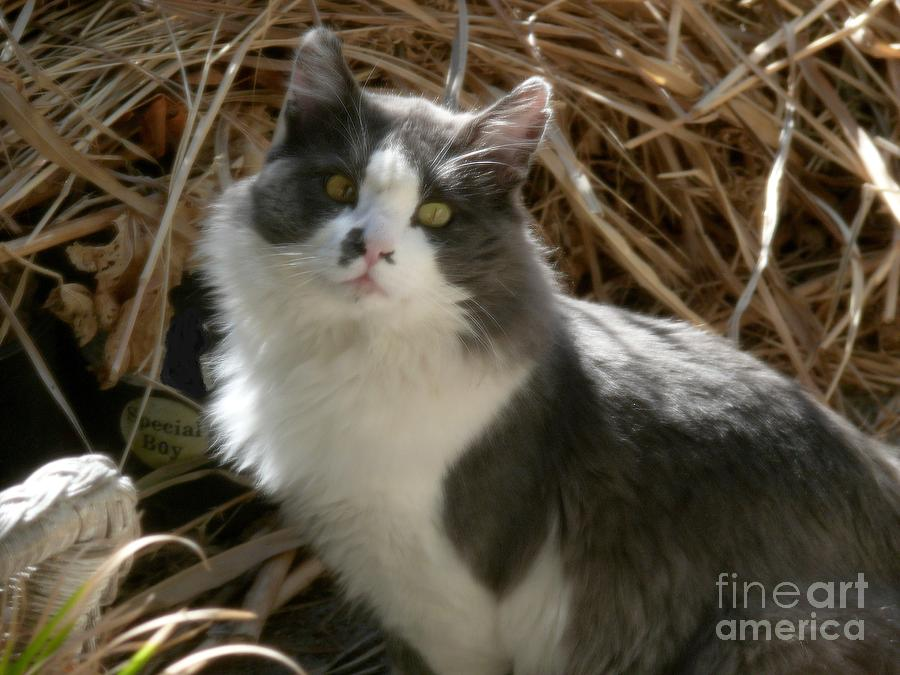 Cats Photograph - Mother Natures Son by Jacquelyn Roberts