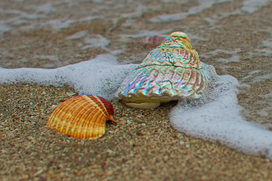 Seashell Photograph - Mother Of Pearl by Robert Bascelli
