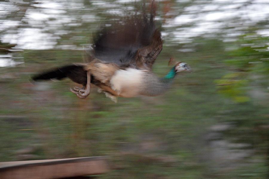 Bird Photograph - Motion In Air by Mahendra Mithapara