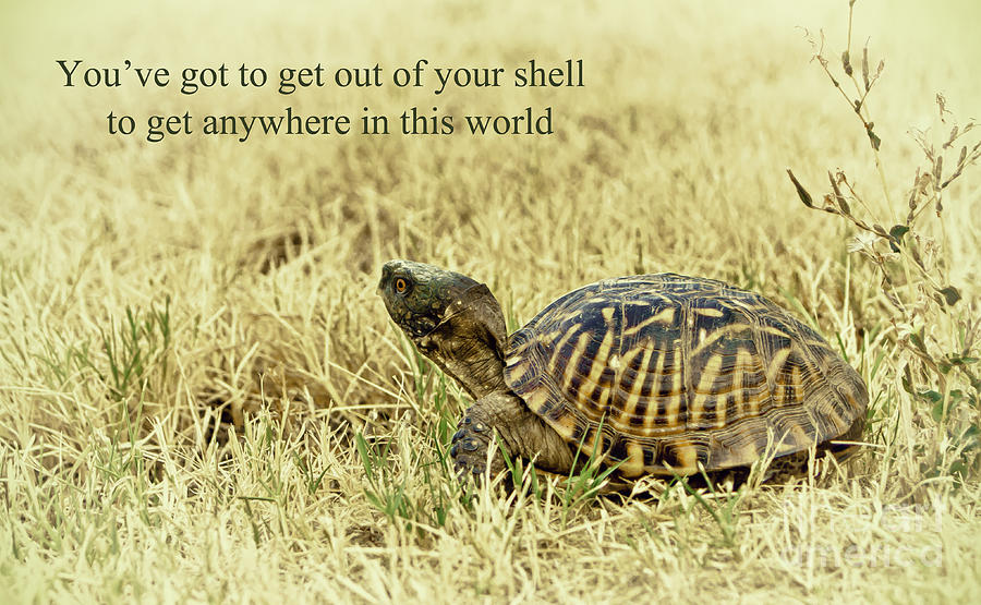 Animal Photograph - Motivating A Turtle by Robert Frederick