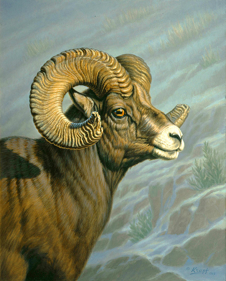 Wildlife Painting - Mount Everts Ram by Paul Krapf