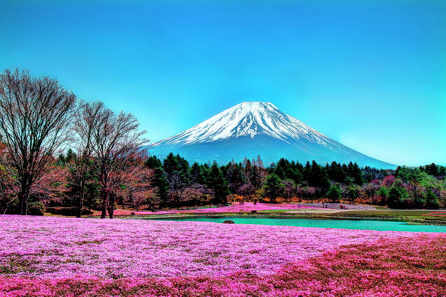 Mount Fuji In Spring And Blue Sky Photograph by Michaël Ducloux