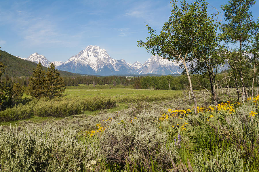 Mount Moran View Wildflowers Grand Teton National Park Mountain Landscape Photograph - Mount Moran View by Brian Harig