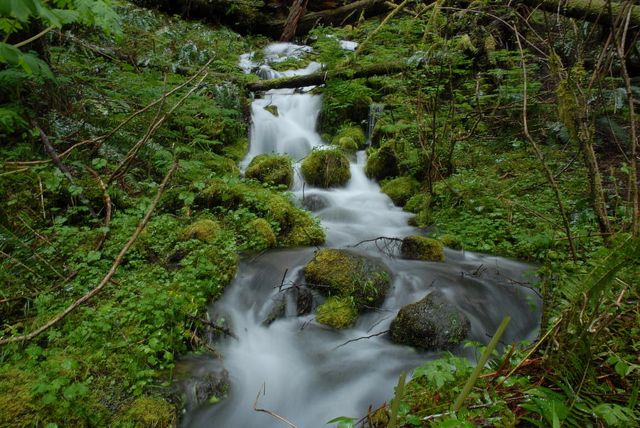 Flowing Water Photograph - Mount Rainier Brook by Clifford Pugliese