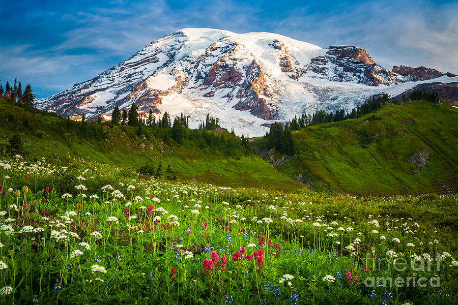 America Photograph - Mount Rainier Flower Meadow by Inge Johnsson