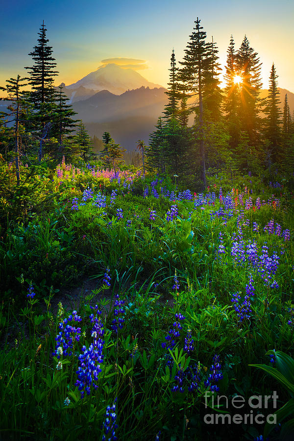 Mount Rainier Sunburst Photograph