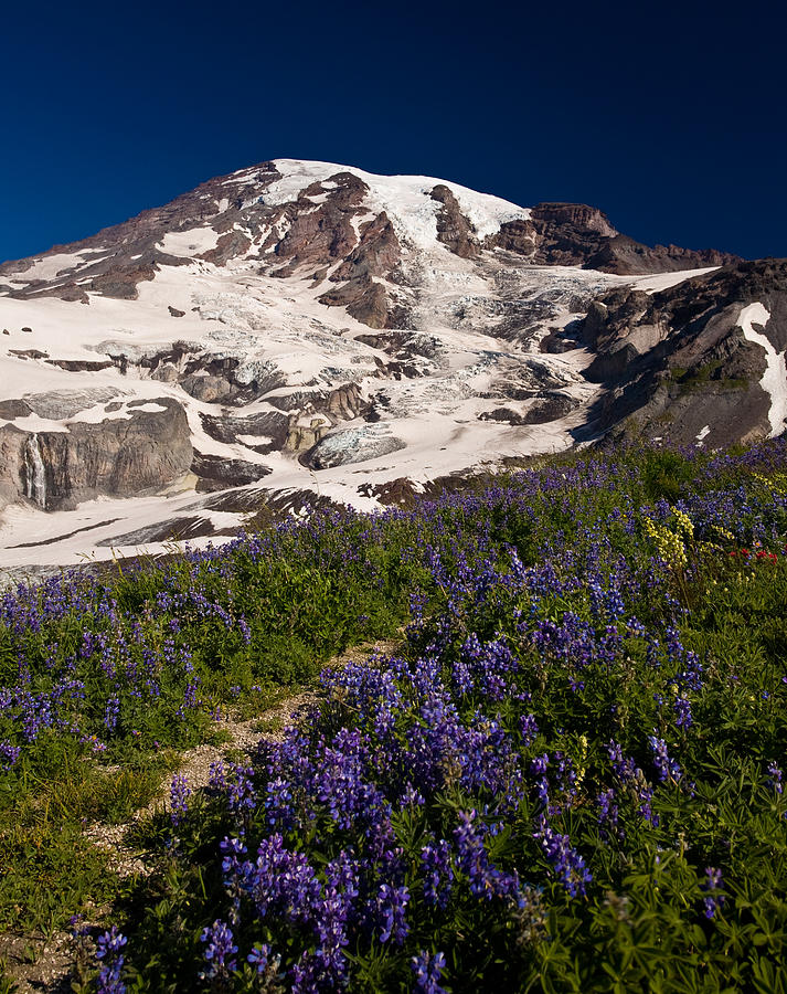 Mt Rainier Photograph - Mount Rainier Wildflower Meadows by Mike Reid