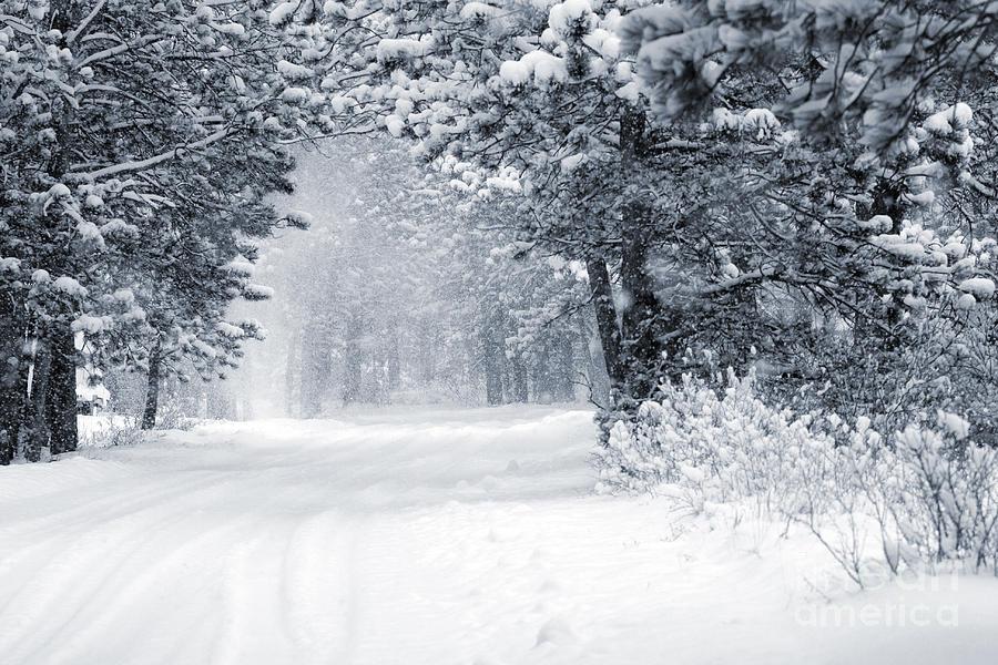 Mountain Blizzard Photograph