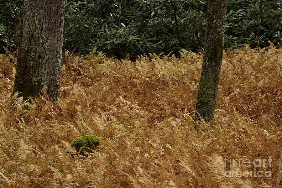 Ferns Photograph - Mountain Carpet by Randy Bodkins