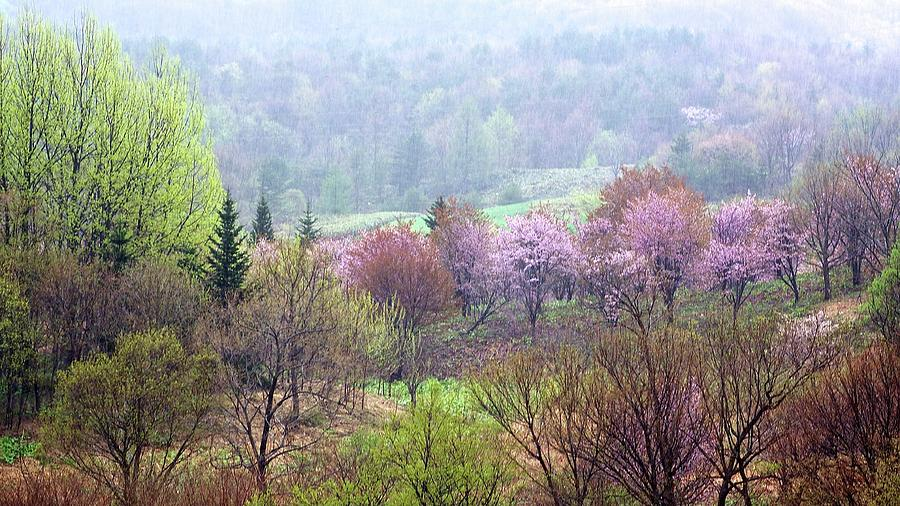 Mountain Cherry Trees Photograph by Jasohill Photography