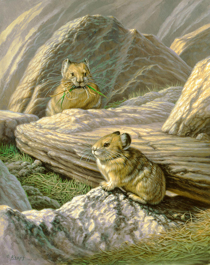 Wildlife Painting - Mountain Haymakers - Pika by Paul Krapf
