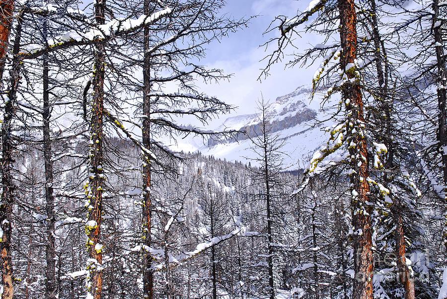 Mountain Landscape Photograph