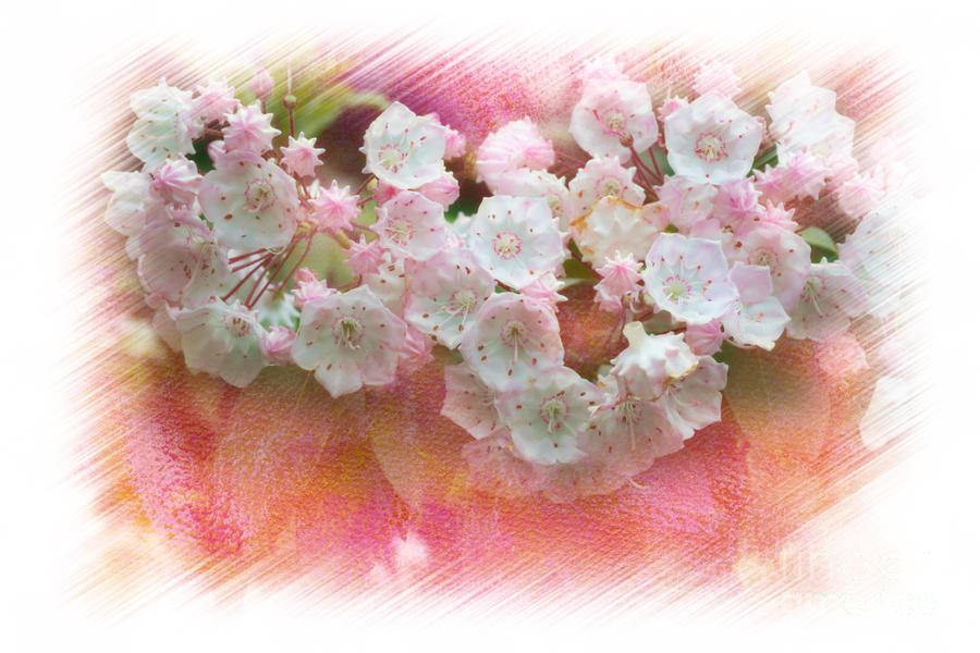 Mountain Laurel Flowers Photograph - Mountain Laurel Flowers by Dan Friend