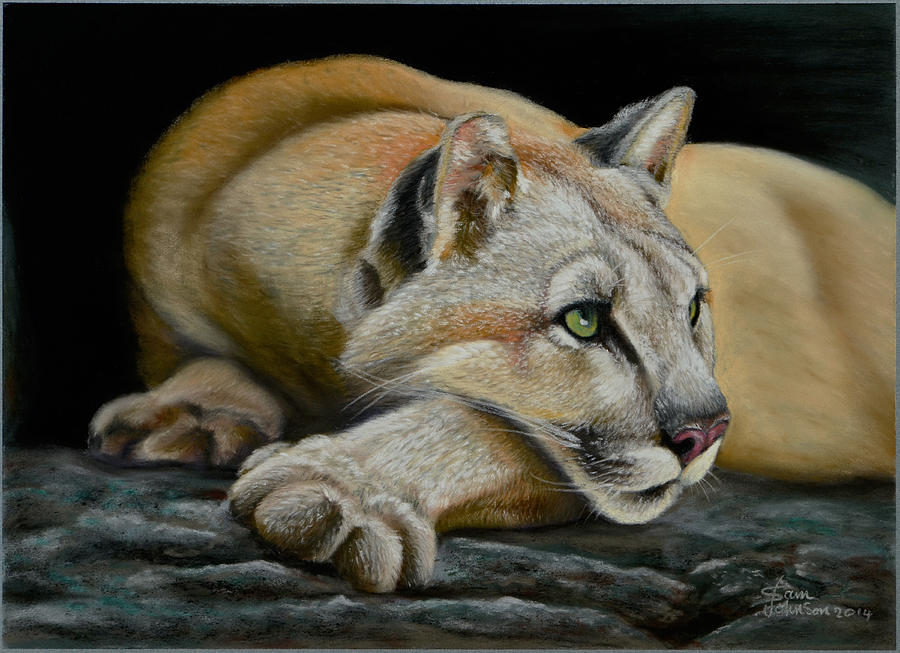 Mountain Lion by Sam Davis Johnson