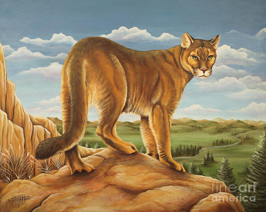 Mountain Lion by Tish Wynne