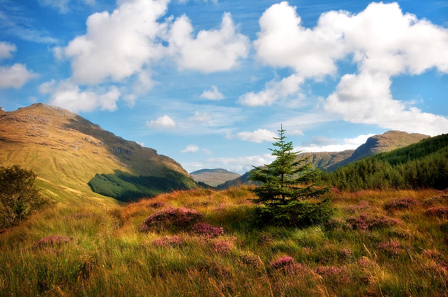 Scotland Photograph - Mountain Pastoral. Rest And Be Thankful. Scotland by Jenny Rainbow